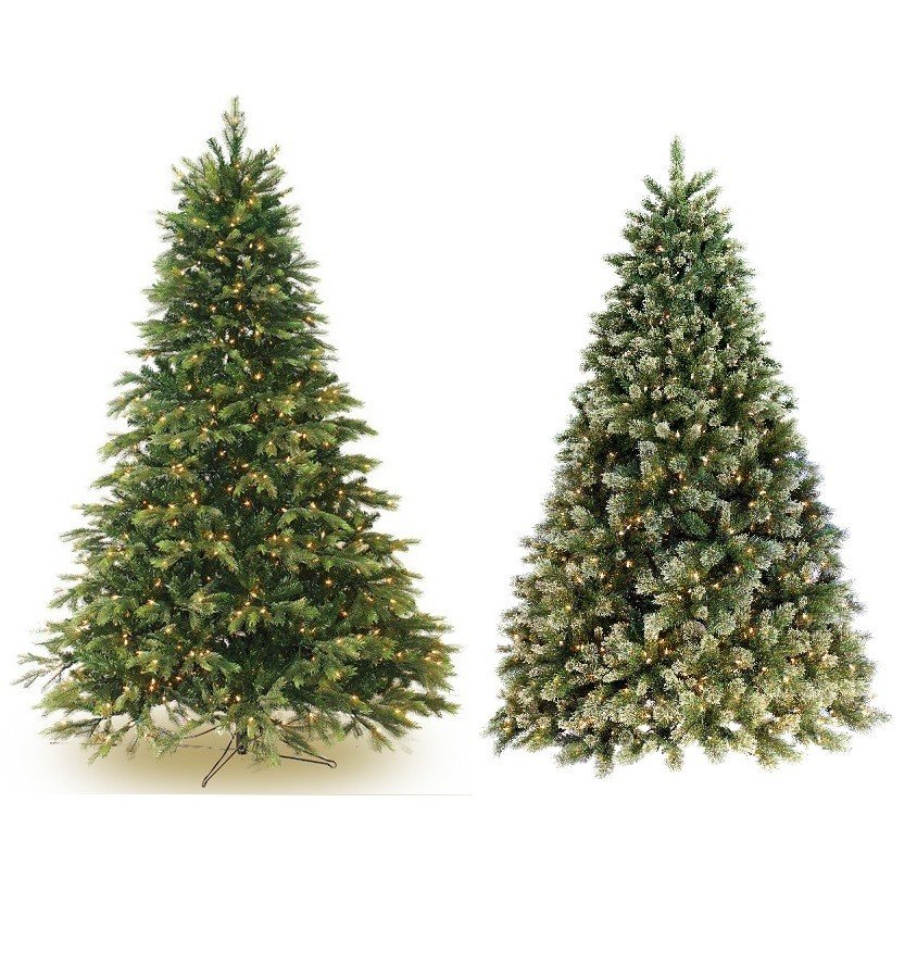 Cashmere Fir & Norway Spruce