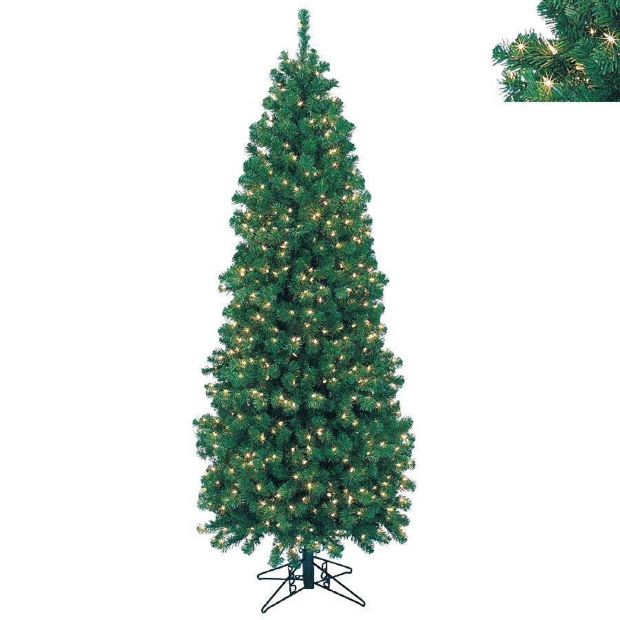 Northern Cypress